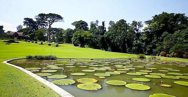 Bogor Botanical Gardens In Central Bogor Sub District West Java Province