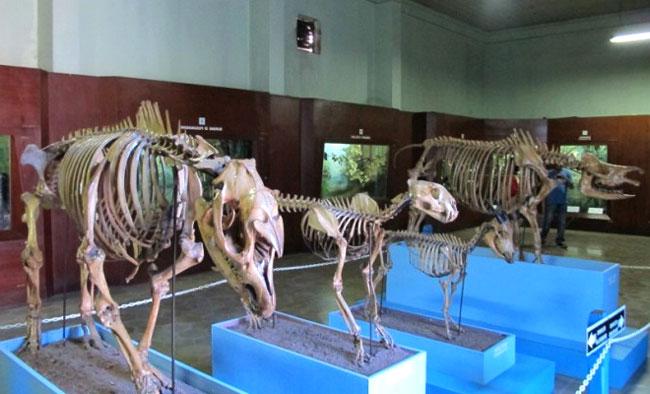 Bogor Zoology Museum In Central Bogor Sub District